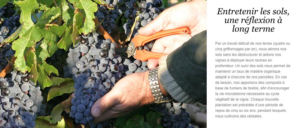 cycle vigne saison chateauneuf du pape