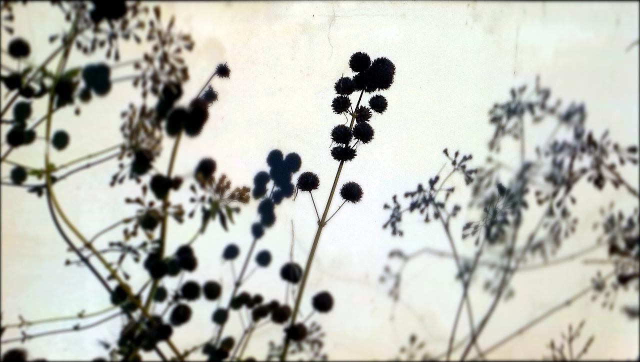 graine nature balade botanique