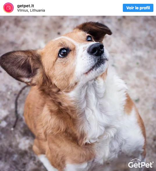 adoptez chiens abandonnés