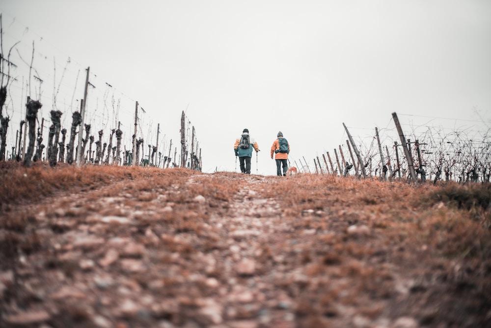 oenotourisme france vin