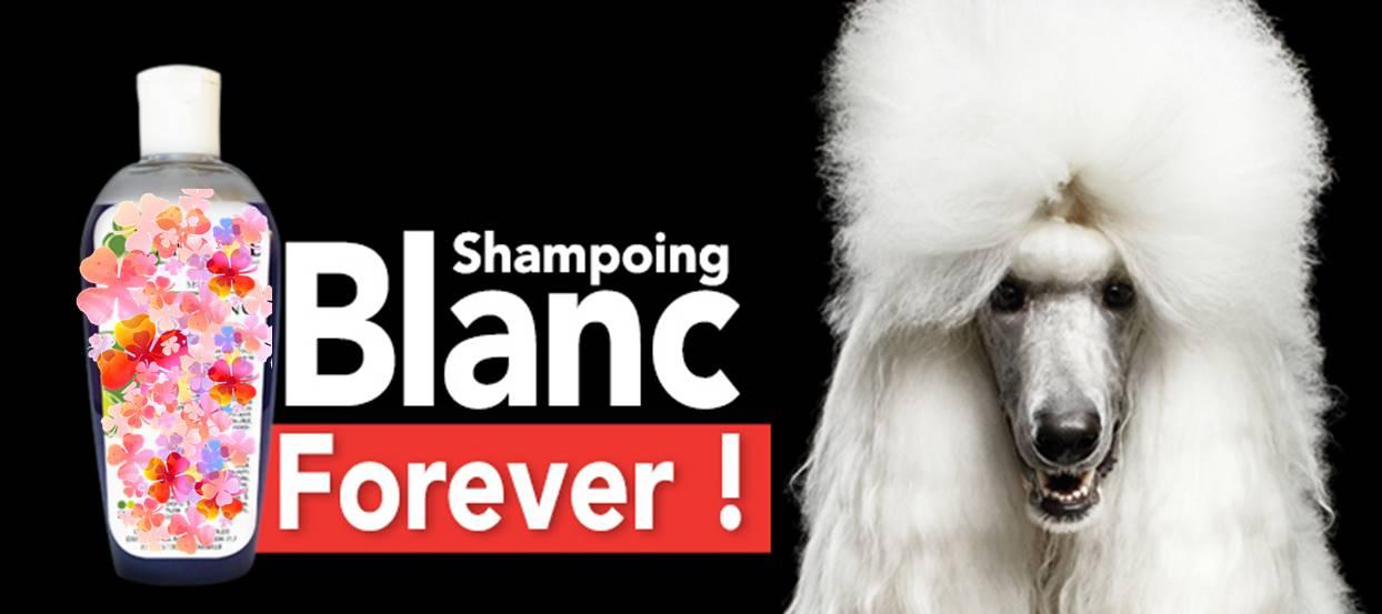 shampoing chien blanc