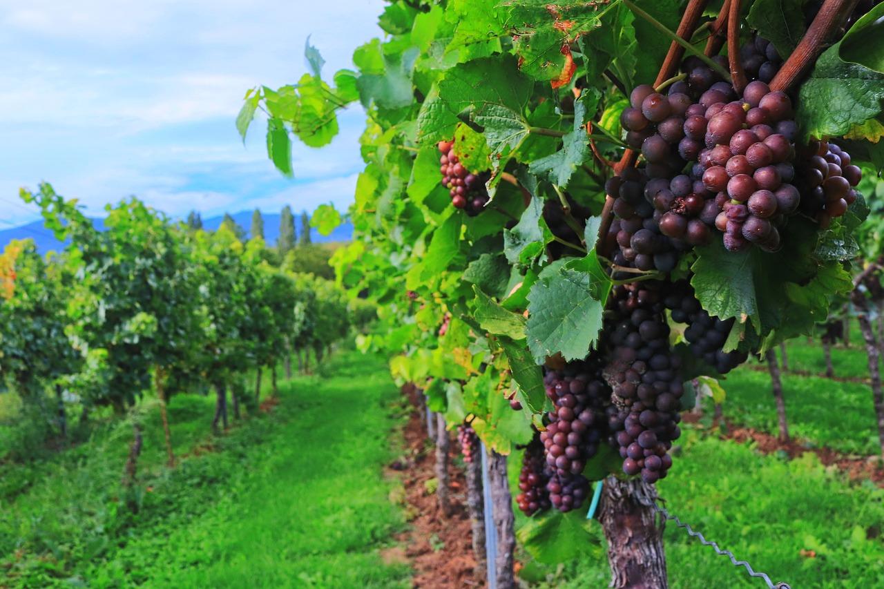 métiers du vin