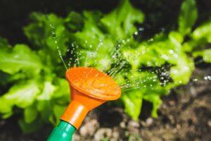 arrosage potager jardin