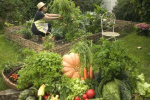 jardinage jardin collectifs