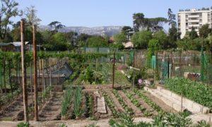 jardinage jardin collectifs marseille