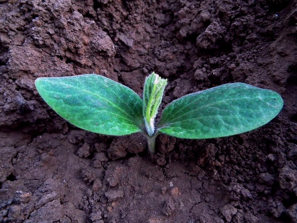 plantation légumes été potager arrosage