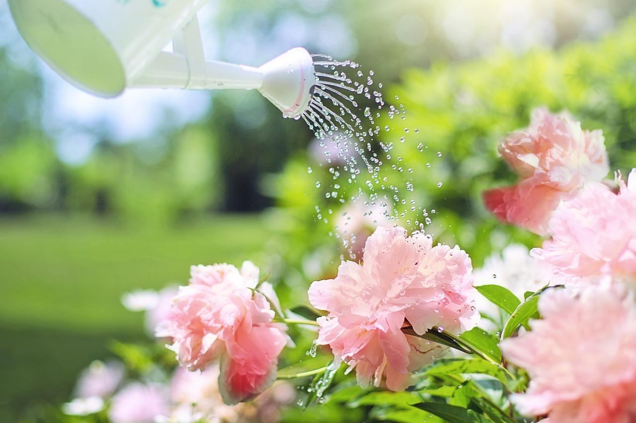 arroser plantes jardin