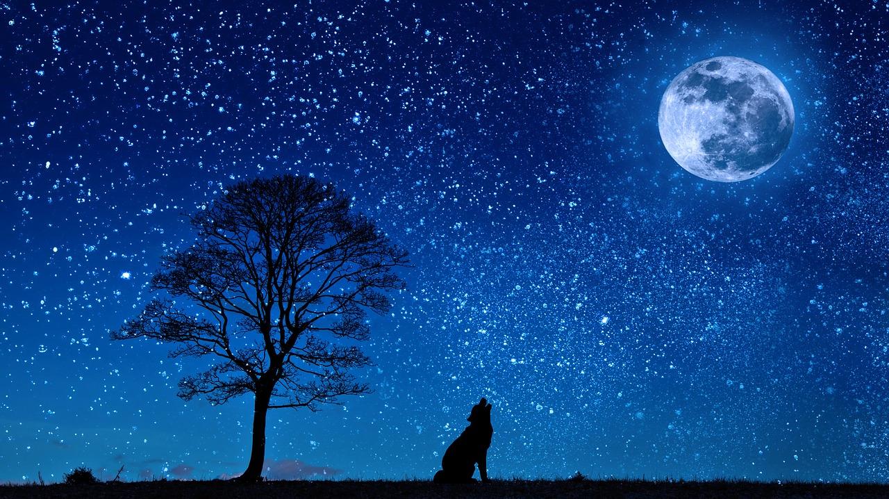 pleine lune animaux chiens